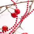 Winter berries - Foto de Stock