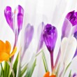 Rich spring flowers — Stock Photo