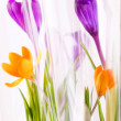 Rich spring flowers — Stock Photo #1119890