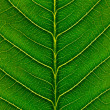Macro leaf - Stock Photo