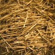 Hay — Stock Photo #1046363