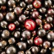 Royalty-Free Stock Photo: Currants