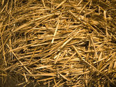 The hay — Stock Photo