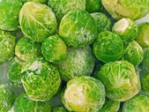The Brussels sprout — Stock Photo