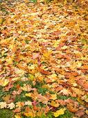 Fall background — Stock Photo