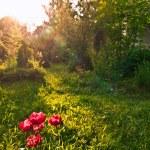 Garden — Stock Photo #1203478