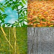 Stock Photo: 4 seasons