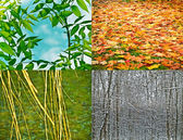 4 seasons — Stock fotografie