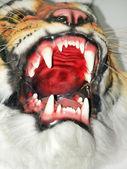 I`m Tiger — Stock Photo