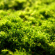 Carpet Moss, Extreme Closeup — Stock Photo #1116319