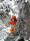 Woman skier with icy trees — Stock Photo