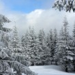 Foto Stock: Winter forest