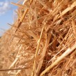 Haystack — Stock Photo #1289272