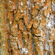 Orange bark background - Stock Photo
