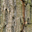Background bark - Stock Photo