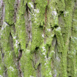 Green bark background - Stock Photo