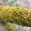 Moss on tree branch - Stock Photo
