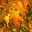Stock Photo: Autumn colours
