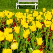 Park bench and yellow tulips — Stock Photo