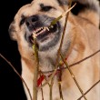 Gnawing dog - Stock Photo