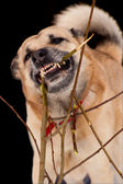 Gnawing dog — Stock Photo