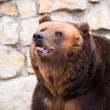 Stock Photo: Brown bear in Moscow zoo