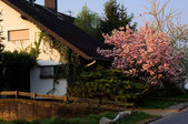 Spring in Germany — 图库照片