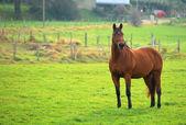 草地上的马 — 图库照片