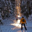 Stock Photo: Cross country skiing in wood