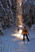Cross country skiing in wood — 图库照片