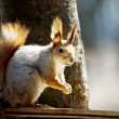 Squirrel — Stock Photo #1120582