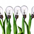 Lamp bulb tulips — Stock Photo