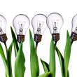Lamp bulb tulips - Stock Photo