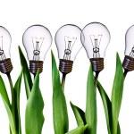 Lamp bulb tulips — Stock Photo