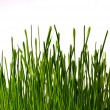 Bush of grass — Stock Photo #1052265