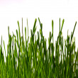 Bush of grass - Stock Photo