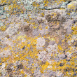 Stock Photo: Moss on stone texture