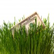 Banknote in grass — Stock Photo
