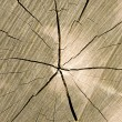Royalty-Free Stock Photo: Timber cut with cracks