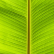 Stock Photo: Banana palm green leaf