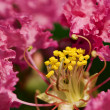 Stock Photo: Rhododendron flower