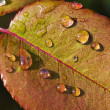 Dew on leaf — Foto de Stock