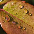 Dew on leaf — Photo
