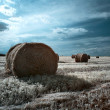 Hay rolls — Stock Photo #1088502