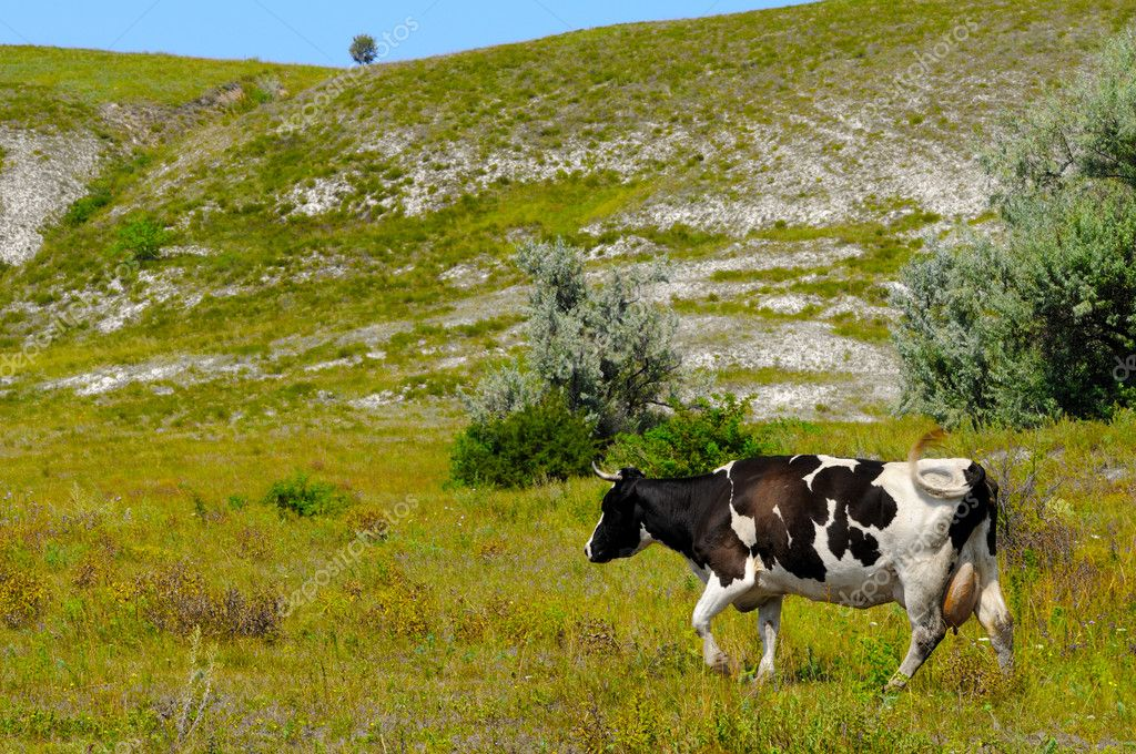 Rural landscape with a grazing cow background — Stock Photo #1088326