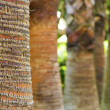 Palm trunk — Stock Photo #1094573