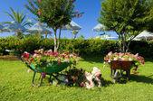 Decorative flower garden — Stock Photo