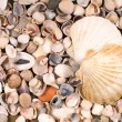 Stock Photo: Big and small shells