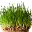 Stock Photo: Bush of grass