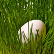 Egg on grass — Stock Photo